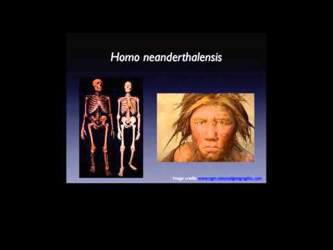 Teeth and Human Evolution on YouTube
