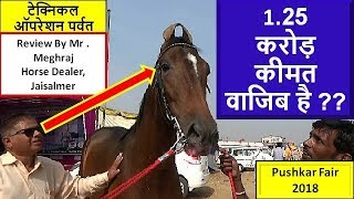 सवा करोड़ का घोड़ा Pushkar Mela Horse market : 12 Million Cost Indian Marwari Stallion Parwat