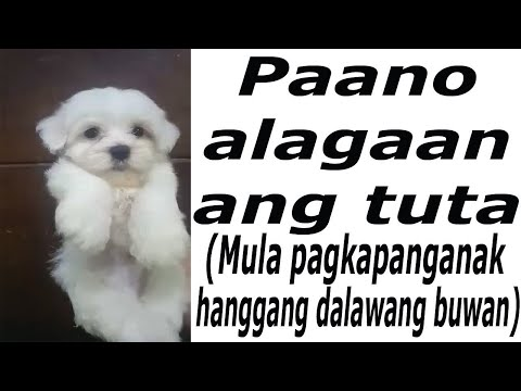 Paano alagaan ang tuta  (How to Take care of Puppies from 0  to 2 months of age) Quick tutorial
