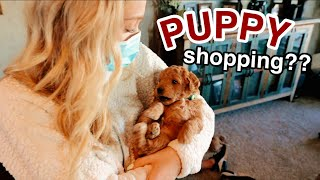 come with me to pick out a puppy for christmas!!