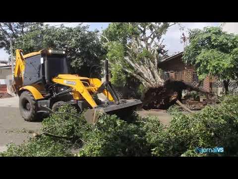 Temporal derruba árvores e destelha prédios em Sapucaia do Sul