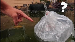 3 NEW FISH for My Backyard POND!!