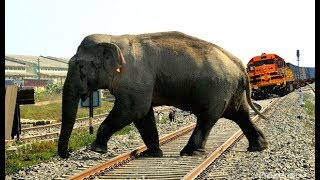 ट्रैन के सामने आ खड़ा हुआ हाथी | CRAZY ELEPHANT STOPS THE TRAIN AND ESCAPES IN INDIAN TRAIN SIMULATOR