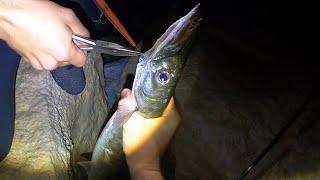 Барракуда морская щука