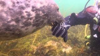 لم يفهم الغواص ماذا يريد هذا الوحش العملاق.. ولكن عندما مسك بيده اكتشف المفاجاه!!