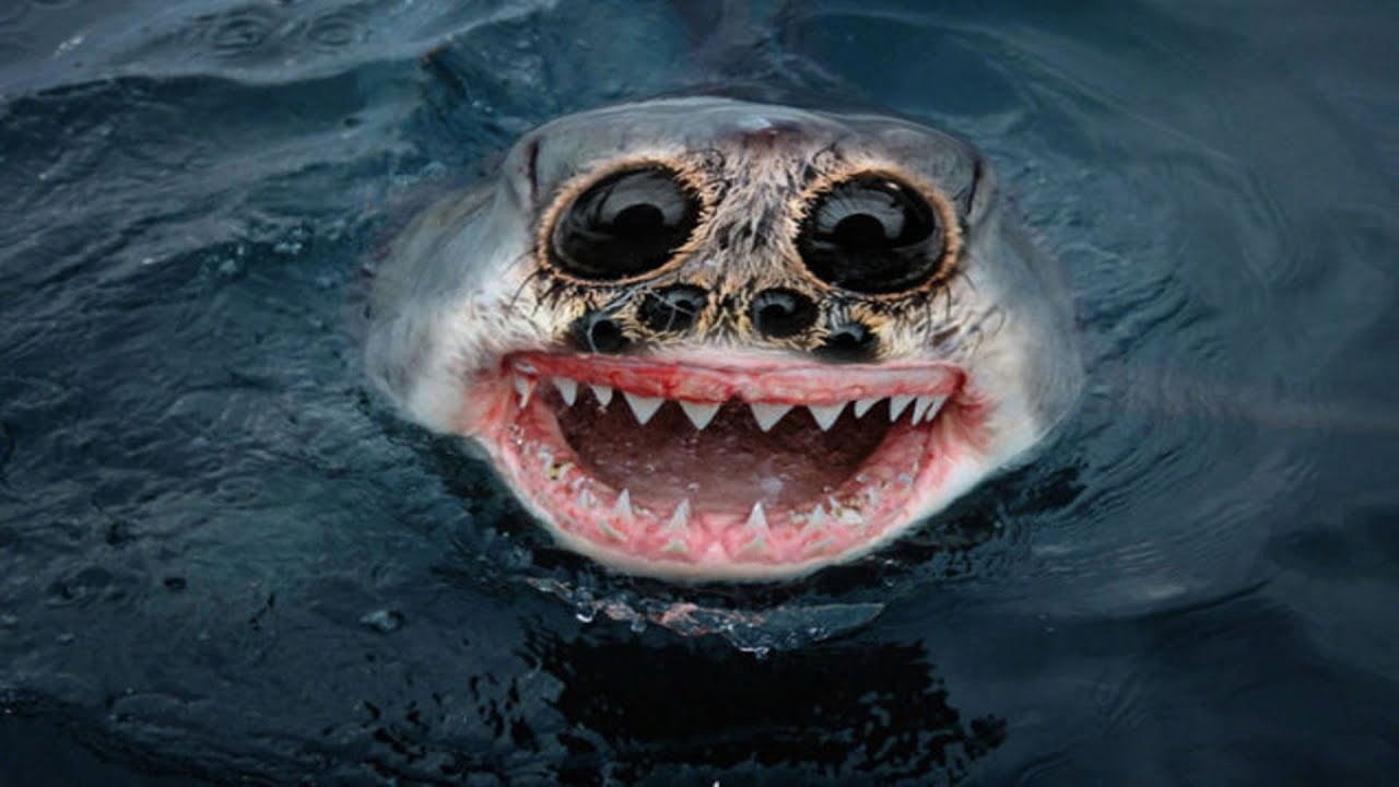 Scary Animals That Are Real Los 10 Animales...