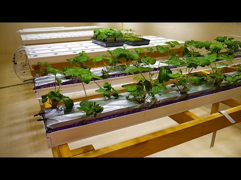 Part 4 Strawberry Table Basement Hydroponic Led Garden