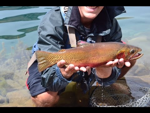 Cutthroat Fly Fishing In Rocky Mountain National Park