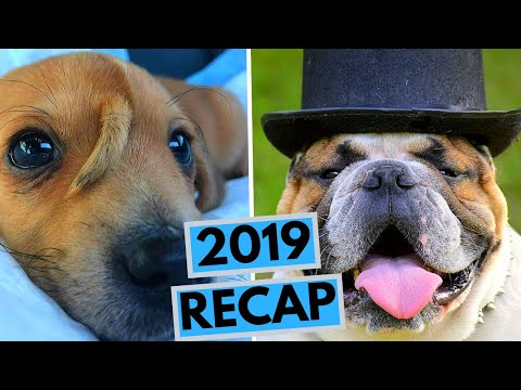 What Happened in Dog World in 2019?
