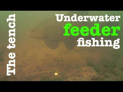 The Tench - Underwater Feeder Fishing - Breamtime S2 E9