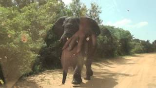 Elephant attack 29 march 2016 St. Lucia,