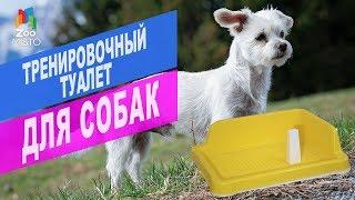 Тренировочный туалет для собак | ОБЗОР тренировочного туалета для собак