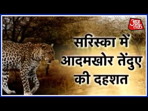 Aaj Subah: Special Operation Launched To Spot Killer Leopard In Rajasthan's Sariska Tiger Reserve