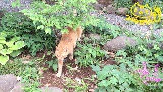 最近立て込んでましてアップが遅れてます…) 自分の庭って認識しているの...