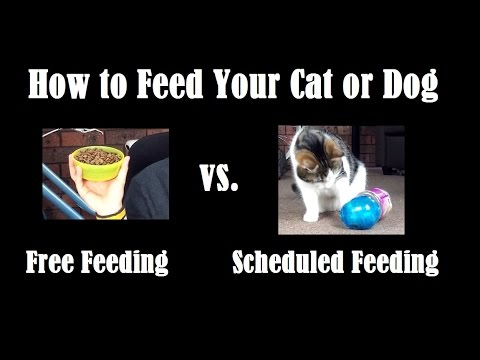 How to Feed Your Cat or Dog - Free Feeding vs Scheduled Feeding