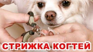Как правильно стричь когти собаке. Быстро и легко.