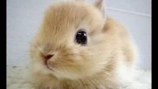 Lil bunny