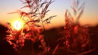 Утро, солнце, трава