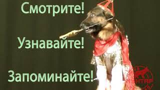 Дрессированные собаки на сцене!