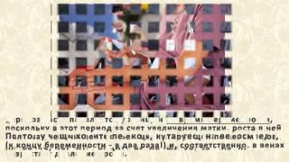 Смотреть Почему При Варикозе Чешутся Ноги - Чешутся Вены При Варикозе(, 2015-02-23T14:45:02.000Z)