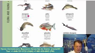 25 ENGLISH VISUAL DICTIONARY СЛОВАРЬ С КАРТИНКАМИ , ЖИВОТНЫЕ