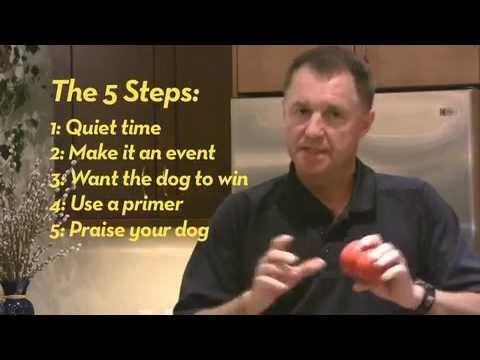 Tips for Kong Dog Toys