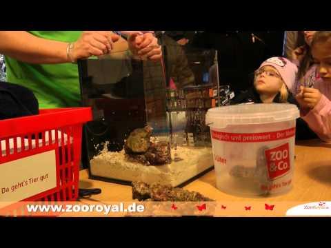 Einrichten eines Dennerle Nano Marinus Aquarium