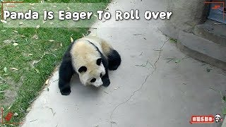 Panda Is Eager To Roll Over | iPanda