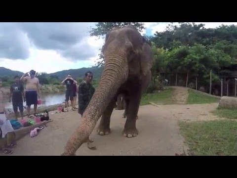 Pacific Discovery- Southeast Asia Semester 2015