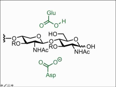 Polysaccharide Cleavage with Glycosidases