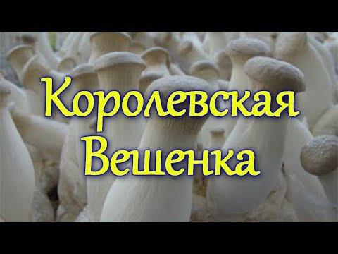 Грибы съедобные и ядовитые. Описания и виды грибов.