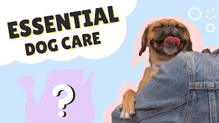 MUST HAVE DOG CARE ITEMS || Pugalier Care