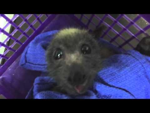 Sugar Plum Fairy Batty Loves Grapes Too - Enthusiastic Nom Noms