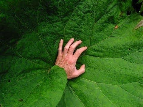 Dünya nın En Ölümcül 8 Bitkisi