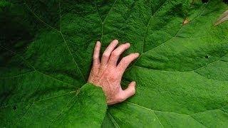 Dünya'nın En Ölümcül 8 Bitkisi