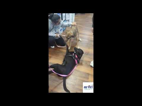 Mother Dog Reunited with Puppy - Tries to Nurse Her