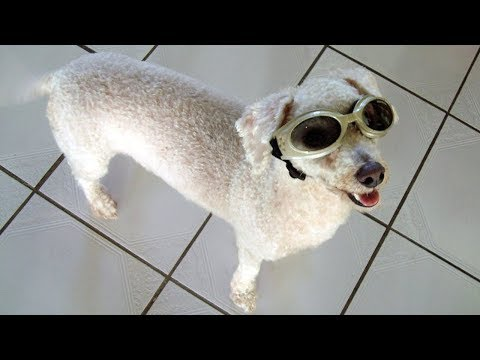A Tribute To Peppy(The best dog ever!)