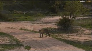 Pt 2 Safari Live's Sunset Safari Drive at 4:30 PM on Dec 03, 2017 ( Hosana & Tingana ) thumbnail