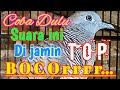 Perkutut Lokal Memanggil Kawan Lawan Masteran Paling Ampuh Bikin Rame  Mp3 - Mp4 Download