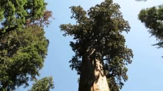 General Sherman (tree)