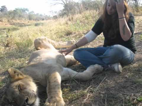 Quality Time with the Lions (Toto - Rains Down in Africa)