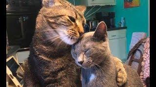 Спасенный кот был хмурым и нелюдимым… Но вот в доме появилась новая кошка!
