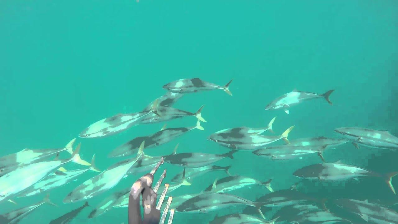 ловля в японском море