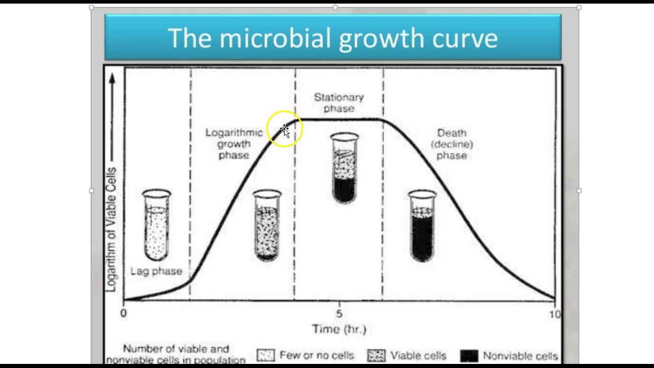 closed growth curve lab report Since bacteria are easy to grow in the lab, their growth has been studied  extensively it has been determined that in a closed system or batch culture (no  food added,  additionally, this growth curve can yield generation time for a  particular.