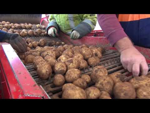 "Potato farming and land management in Australia - ""Hand in Hand: Garry's story"""
