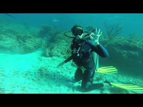 Dai: Shark bite! - YouTube