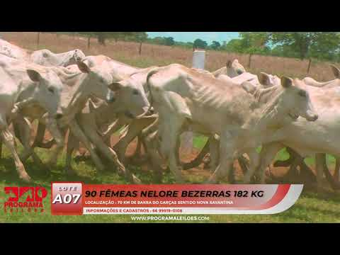 LOTE A07