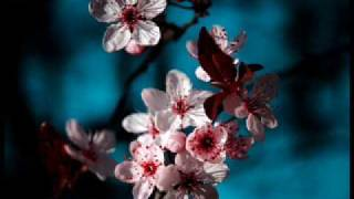 Qntal - Frühling