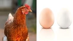 Dieses Körperteil eines Huhns verrät die Eierfarbe