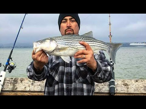 Martinez Pier Fishing Ocean Runner Striped Bass